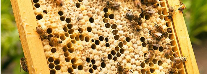 cadre-abeilles